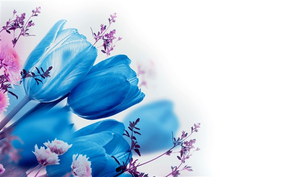 Wallpaper Blue tulips, white background