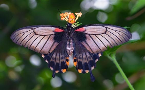 Fondos de pantalla Mariposa, alas, insecto macro fotografia