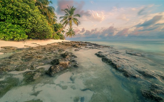 Fond d'écran Côte, mer, palmiers, nuages, nature