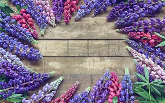 Обои Разноцветные цветы люпина, весна
