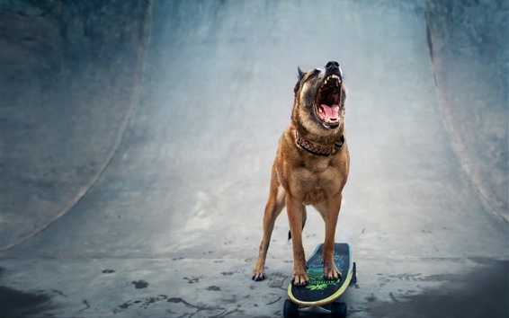 Wallpaper Dog, skateboard