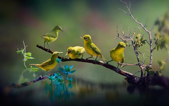 Papéis de Parede Cinco pássaros, galhos, lago