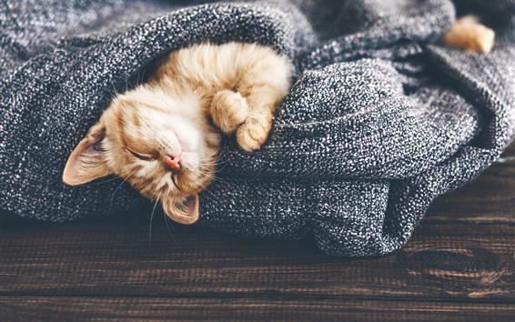 Обои Пушистый котенок спит, свитер
