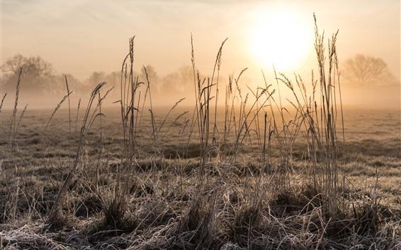 Обои Трава, восход, туман, утро, дымка