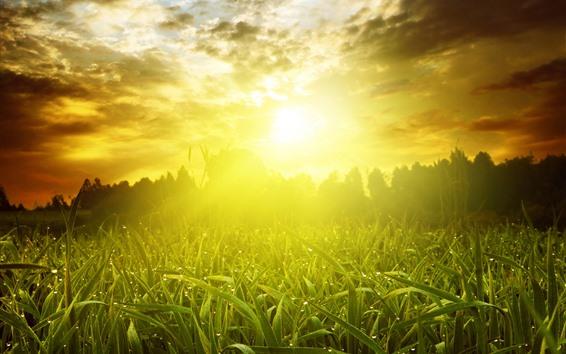Papéis de Parede Grama, sol, amanhecer, brilho, manhã