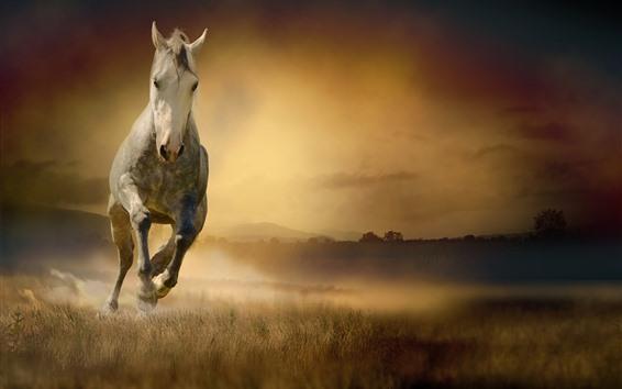 Fond d'écran Cheval courant, vue de face, herbe, brouillard, matin