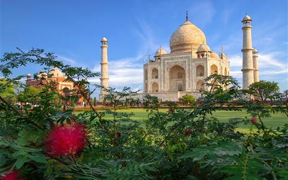 壁紙 インド、タージ・マハル、モスク、茂み