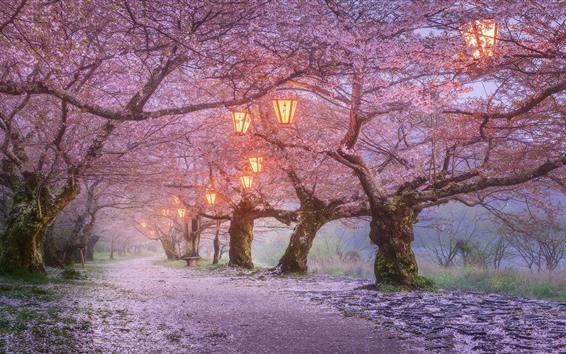 Papéis de Parede Japão, flor de sakura, lanternas, primavera