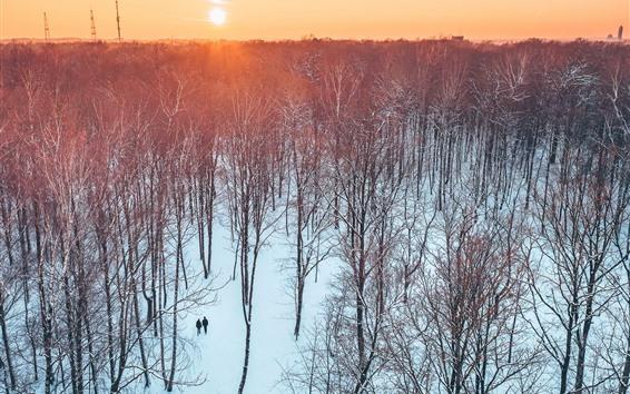 Wallpaper Lithuania, Kaunas, trees, park, sunset, snow, winter