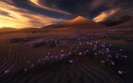 배경 화면 산, 사막, 자주색 꽃