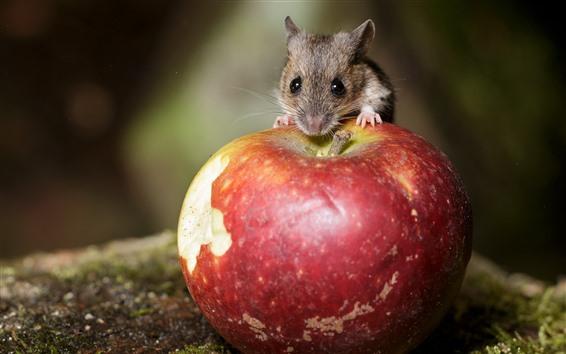 Papéis de Parede Mouse e maçã vermelha