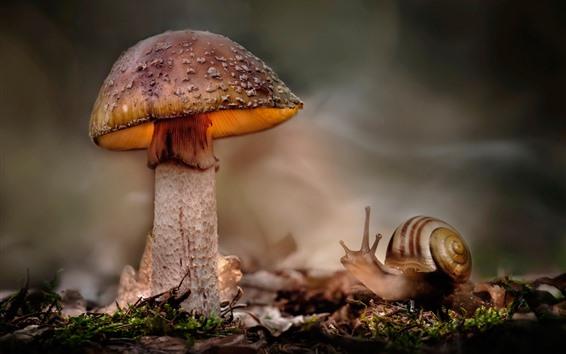 Wallpaper Mushroom and snail