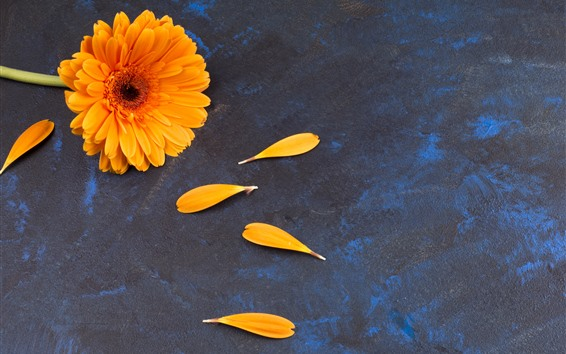 Papéis de Parede Flor de gerbera laranja, pétalas