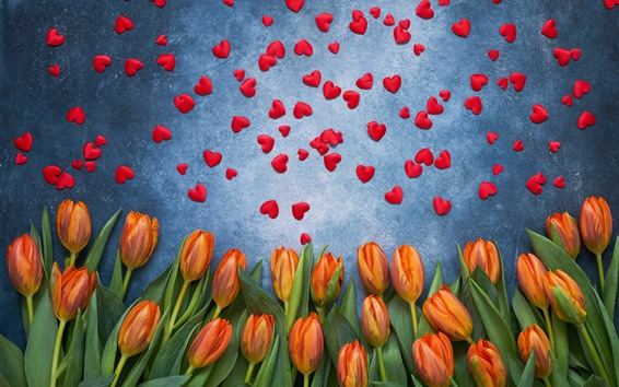 Wallpaper Orange tulips and many red love hearts
