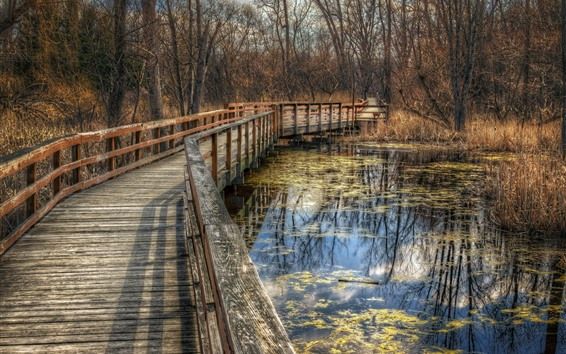 Papéis de Parede Parque, árvores, ponte, lagoa, outono