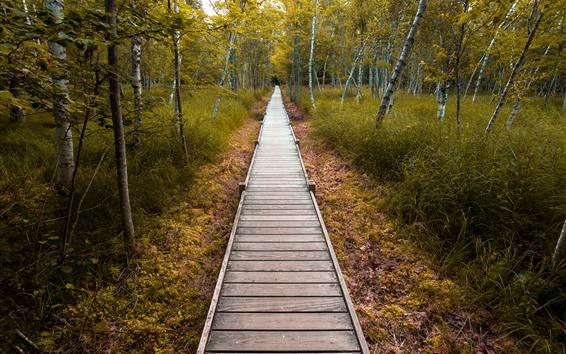Fond d'écran Parc, allée de bois, arbres