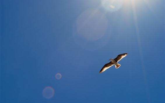 Papéis de Parede Vôo de gaivota, céu, raios de sol