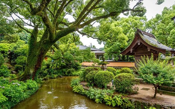 壁紙 シンガポール、公園、小川、木、緑