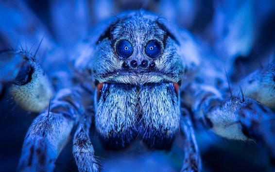 Papéis de Parede Fotografia macro de aranha, olhos, estilo azul