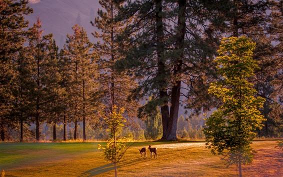 Papéis de Parede Árvores, veados, raios de sol, manhã