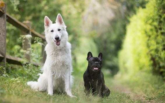 Wallpaper White and black dogs, green background, nature