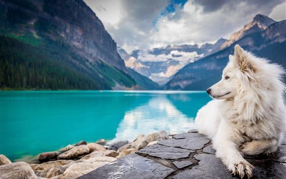 Papéis de Parede Cão branco olhar para trás, lago, montanhas