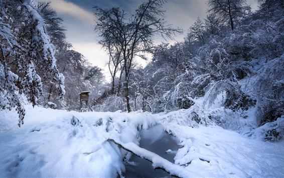 Обои Зима, снег, деревья, лужа