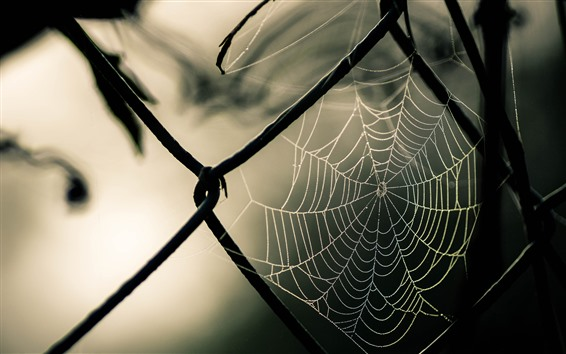 Wallpaper Wire fence, spider web