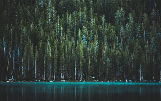 Wallpaper Yosemite national Park, trees, lake, beautiful nature landscape, USA