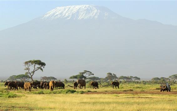 Wallpaper Africa, one flock of elephants