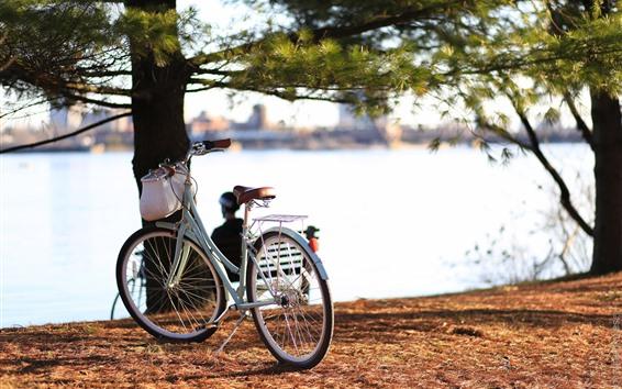 壁紙 自転車、川、木々