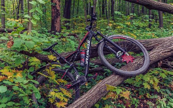 壁紙 自転車、木、森