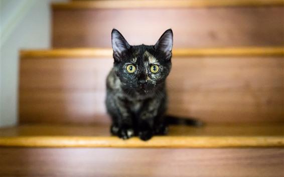 Papéis de Parede Gatinho preto, vista frontal, olhos amarelos, escadas