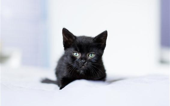 壁紙 黒い子猫、毛皮のような、かすんでいる