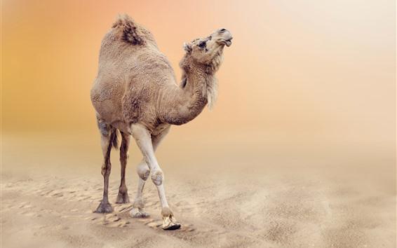 Papéis de Parede Camelo no deserto