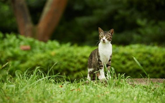 Wallpaper Cat look, green grass, nature