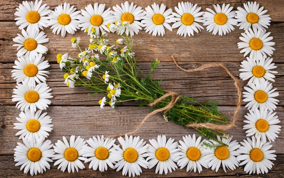Wallpaper Chamomile, daisy, white flowers