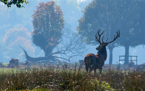 Papéis de Parede Veado, floresta, nevoeiro