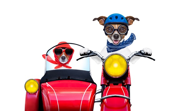 Wallpaper Funny dogs, dog drive motorcycle