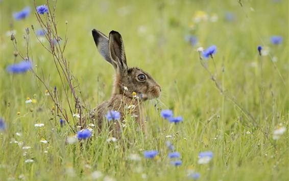 Обои Серый кролик, заяц, трава, голубые цветы