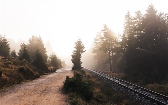 Fond d'écran Matin, arbres, voie ferrée, rayons du soleil, brouillard