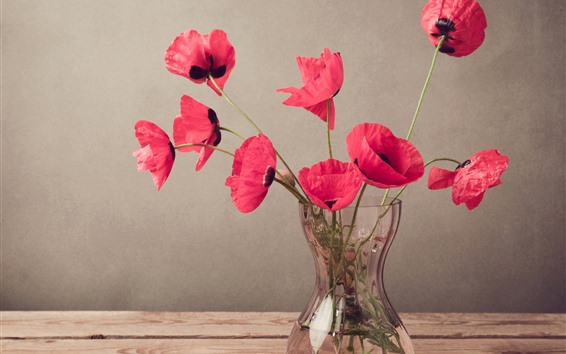 Papéis de Parede Papoilas vermelhas, flores, vaso