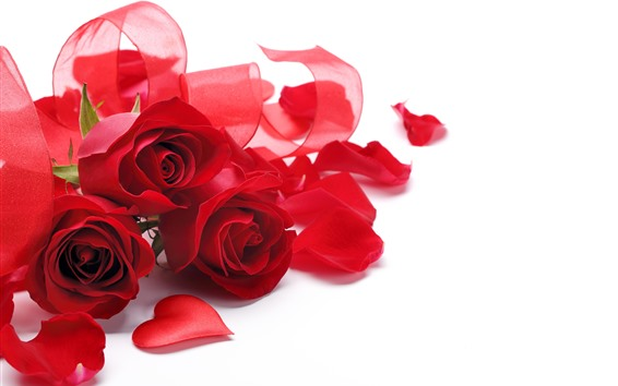 Wallpaper Red roses, bouquet, ribbon, white background