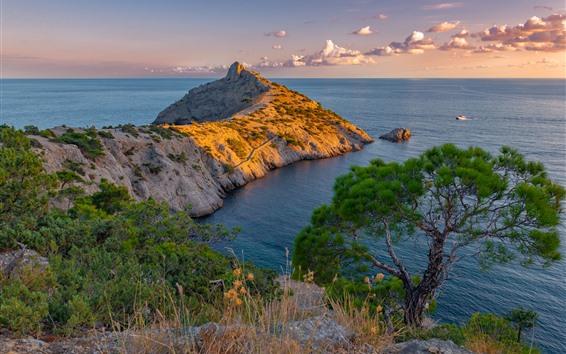 桌布 海,海岸,樹,自然風景