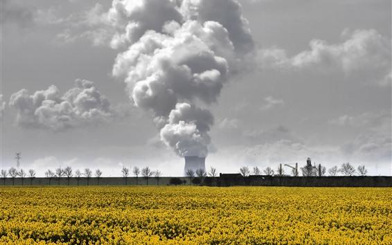 Papéis de Parede Fumaça, fábrica, flores amarelas