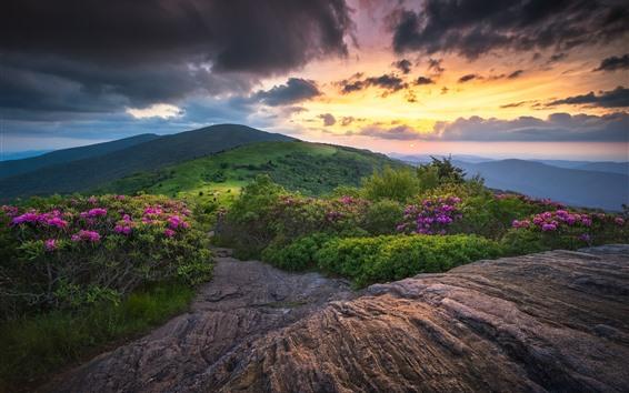 壁紙 日没、山、緑、花、雲、夕暮れ