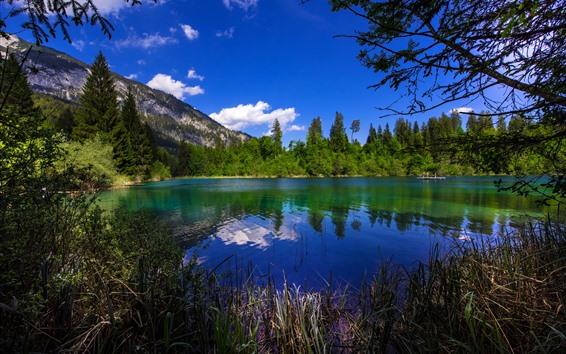 배경 화면 스위스, 나무, 호수, 녹색, 여름