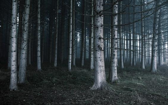 Wallpaper Trees, nature landscape, fog, forest