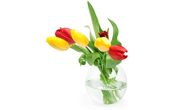 Papéis de Parede Tulipas amarelas e vermelhas, folhas verdes, vaso, gotas de água, fundo branco