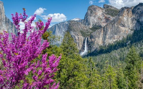 Papéis de Parede Parque Nacional de Yosemite, flores cor de rosa, floresta, montanhas, cachoeira, EUA